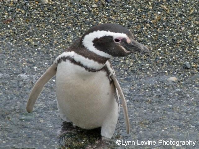 Penguin 3